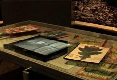 Deutsches Historisches Museum – Unter Bäumen. Die Deutschen und der Wald