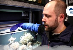 Deutsches Meeresmuseum – Neulich im Museum Ep. 1 Tiefseekorallen im OZEANEUM