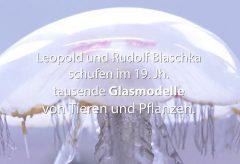 Unterwasserwelt aus Glas im Naturhistorischen Museum Wien