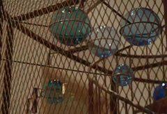 Louise Bourgeois. Strukturen des Daseins: Die Zellen (2015)