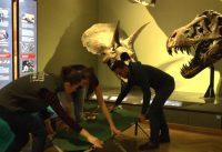 Eine Nacht im Museum – für Erwachsene