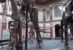 Kunstsammlung NRW:  Klangkunst im Museum für Naturkunde Berlin
