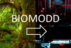 ZKM: Werde Teil von Biomodd – Creating Living Ecosystems Inside Computers