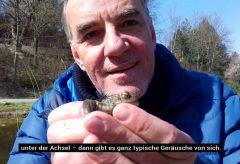 Paarungszeit für Frösche und Kröten