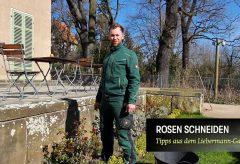 Rosen schneiden – Tipps aus dem Liebermann-Garten